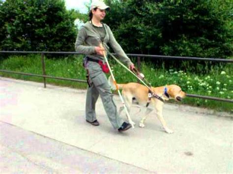 how to a guide for the blind max guide in bulgarian guide dogs for the blind school