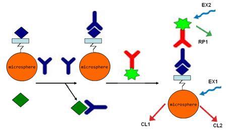 multiplex bead array multiplexing capable immunobiosensor based on competitive