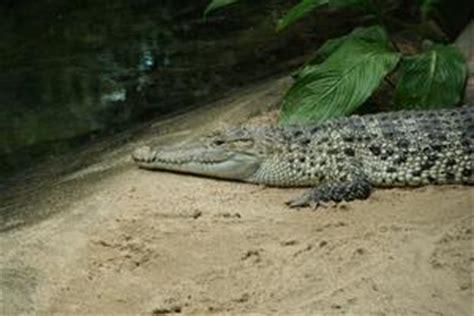 zoologischer garten berlin krokodile zoologischer garten berlin tiere naturfakten