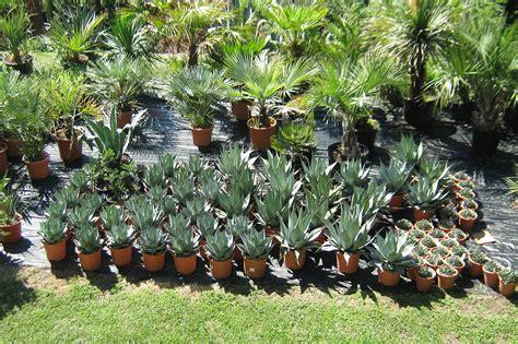 Botanischer Garten Pflanzenverkauf by Il Vivaio Brissago Agaven Und Palmen Einheimische