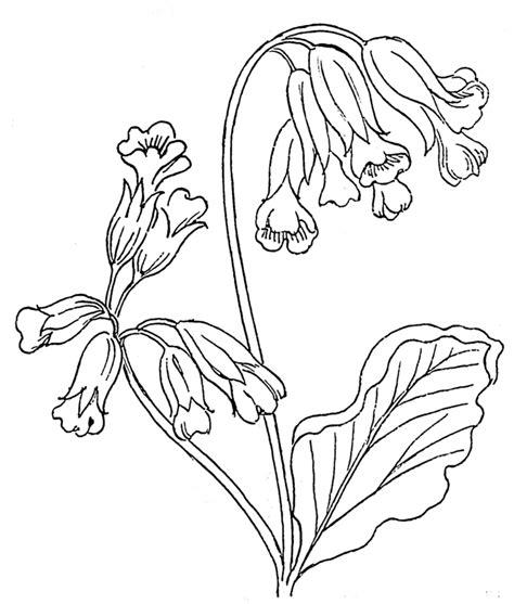 vaso con fiori da colorare disegni da colorare bambini i vaso di fiori avec fiori colora