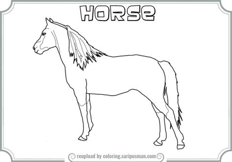 morgan horse coloring page 48 best coloring pages images on pinterest coloring