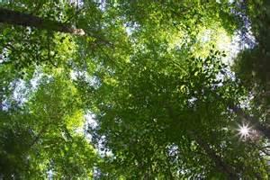 Tree Canopy Tree Canopy