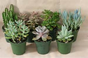 succulents the perfect diy gift the gift exchange blog