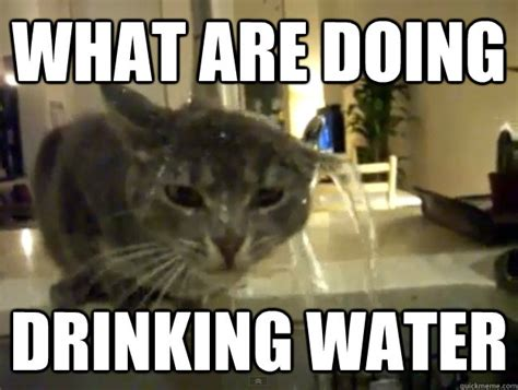 Drinking Water Meme - what are doing drinking water retarded cat quickmeme
