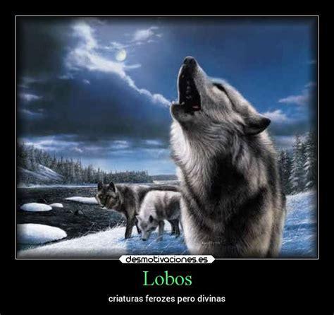 imagenes de animales lobos im 225 genes y carteles de lobos desmotivaciones