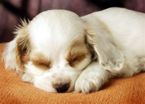 perros que duermen las 3 razones sobre por que los perros duermen tanto