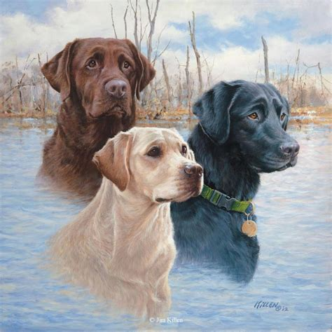 Labrador Retriever Artwork retrievers painted by jim killen 21
