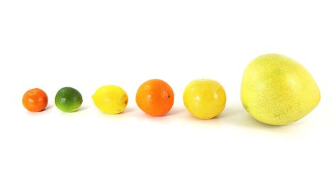 fruit up lines fruit free stock photo citrus fruit in a line isolated
