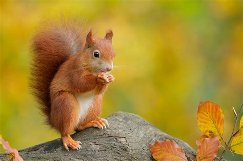animal seasons squirrels autumn the moments that animals making friends with humans thedailytop com