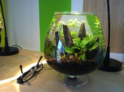 Small Aquarium Aquascape by 3 Liter Nano Tank Aquascaping Aquascaping