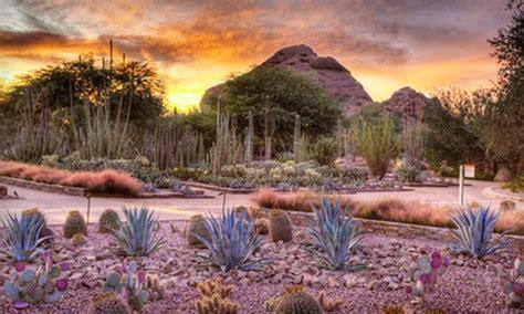 desert botanical garden coupons garden visit desert botanical garden groupon