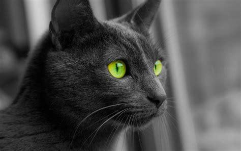 monochrome animals cat animals monochrome selective coloring green