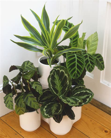 beautiful house plants how to care for houseplants in winter