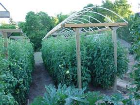 Tomato Garden Ideas Here Is A Great Way To Grow A Lot Of Tomatoes In A Small Area The Trellises