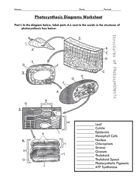 Photosynthesis Diagrams Worksheet Key photosynthesis diagram worksheet images