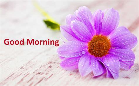 wallpaper flower morning good morning rose flower images free 4k wallpapers