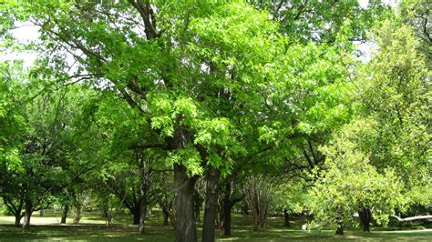 pictures of trees about green tree revival