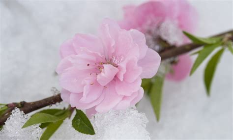 fiori invernali in vaso 10 piante resistenti al freddo fioriscono in inverno