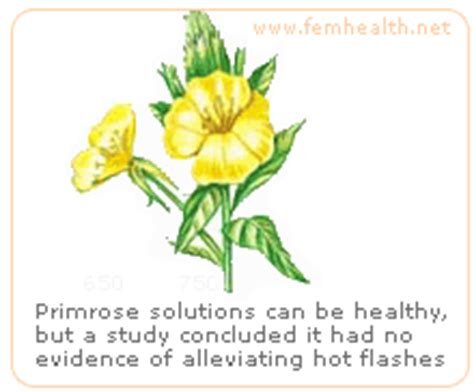 perimenopause navigating the many symptoms is primrose oil a good help for perimenopause symptoms