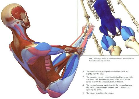 boat pose rows 17 best images about navasana on pinterest yoga poses