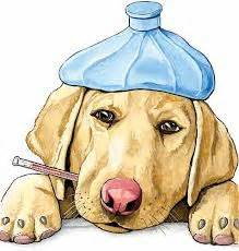 can dogs get sick from humans parvo the virus that kills our pets journey