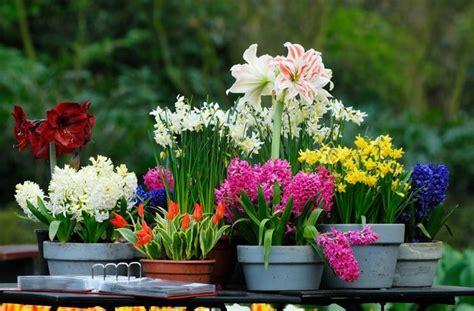fiori da giardino invernali fiori invernali piante da giardino caratteristiche dei