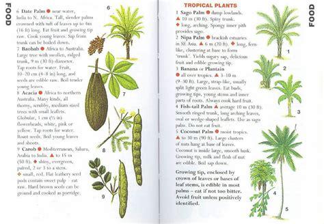 tropical desert animals and plants sas 043 desert tropical plants