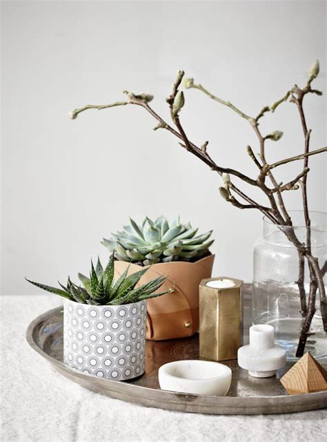 decorating with succulents decoration