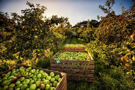 grouchos   orchard food ni  food  good