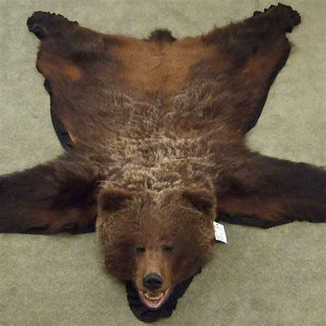 grizzly skin rug grizzly rug decor infobarrel