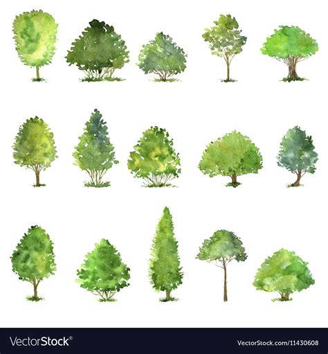 water color tree set of trees drawing by watercolor royalty free vector image