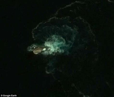 Has Been Spotted by Squid Similar To Kraken Found On Earth