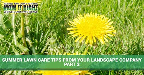 summer lawn care tips lawn care shelby county more summer lawn care tips for