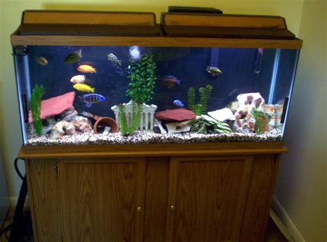 cichlids com tank exles 55 gallon mixed malawi
