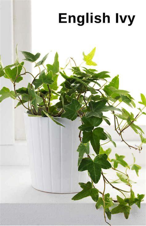 top  pergola plants  grow  pots home gardeners
