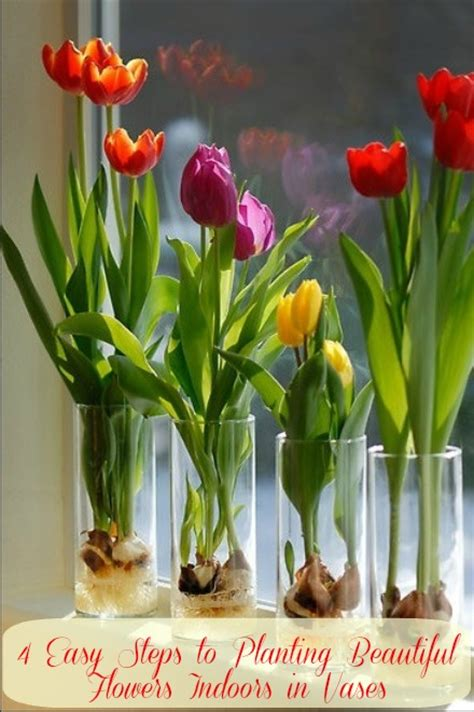 Indoor Plant Vases 4 easy steps to planting beautiful flowers indoors in vases s magazine by