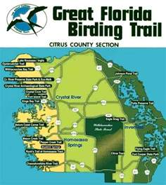 great florida birding trail map 10 best images about citrus county florida on
