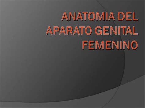 vestibulo anatomia femenina ginecologia anatomia authorstream