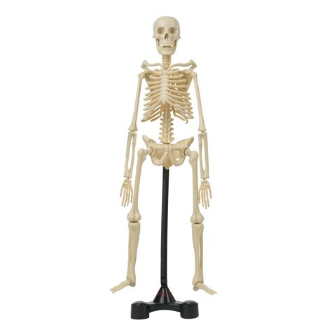 A Of Bones hamleys bones skeleton model kit 163 15 00 hamleys for