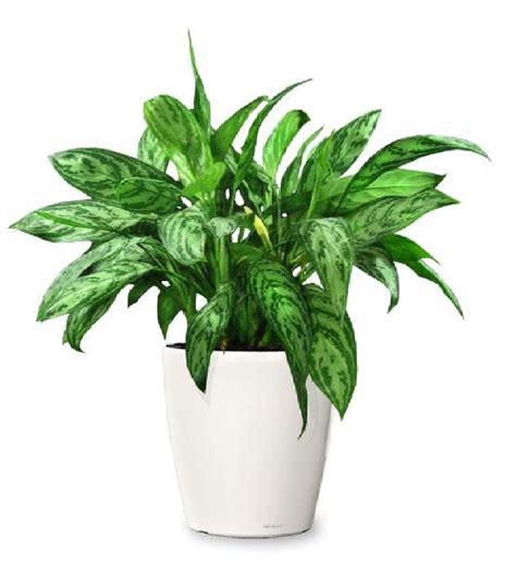 merawat tanaman hias indoor  benar jasa tukang