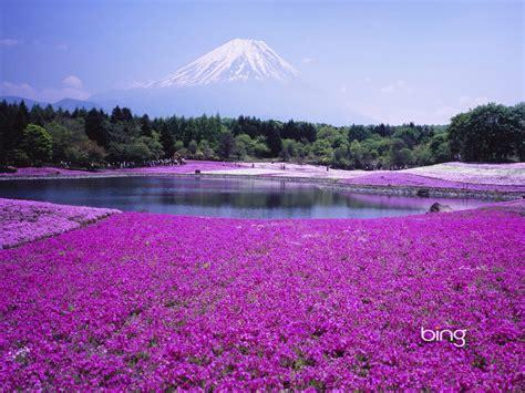 imagenes de paisajes florales paisajes con flores fondos de flores lilas fondos de