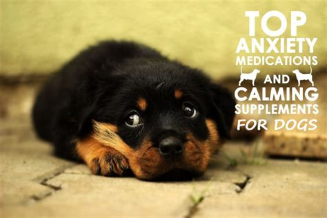 calming meds for dogs top anxiety medications and calming supplements for dogs allivet pet care