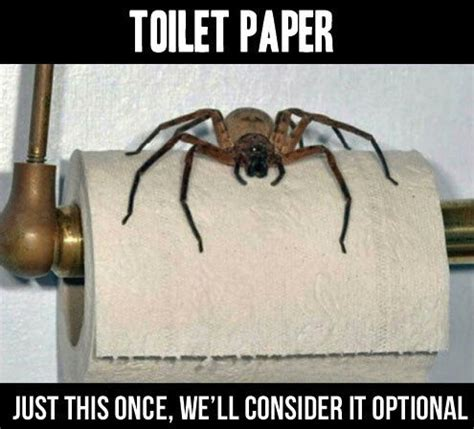 Scary Spider Meme - funny spider meme pictures to pin on pinterest pinsdaddy
