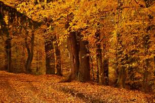 Autumn wood wallpapers 4608x3072 r xjw wp collection