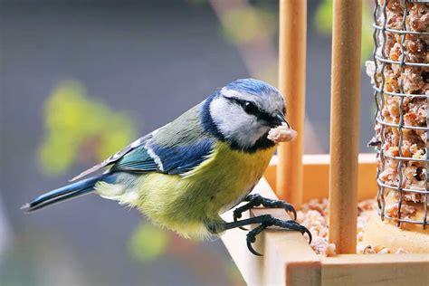 alimentazione uccelli l alimentazione degli uccelli un mondo tutto da scoprire
