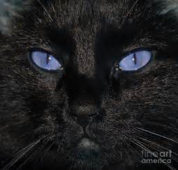 black cat with blue eyes pictures images amp pictures becuo