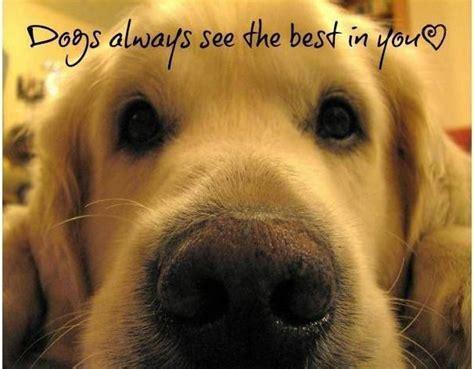 Golden Retriever Meme - truth golden retriever dog golden delights