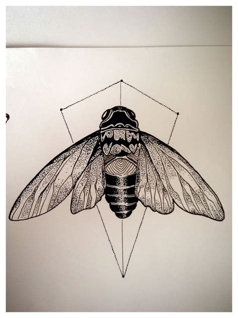 cicada drawing google search tattoos ideas pinterest