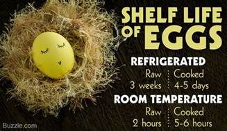 Shelf Boiled Eggs by Shelf Of Boiled Eggs In Refrigerator Best Furniture